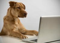 Ciber dog