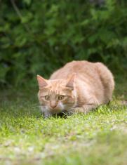 Adult Cat 2