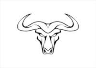 Wild White Bull