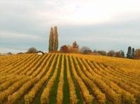 Autumn in the vine