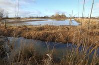 Flooding, Agriculture, Farm Field