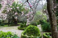 Old garden in the rain