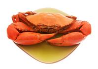 Australian Mud Crab