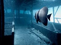 Wreck Under Andaman Sea