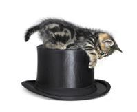 kitten playing on top hat