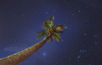 coconut palm at night sky background