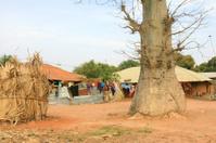 African Backyard