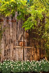 Wooden door in a garden with daisies