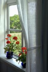 Window with red geranium