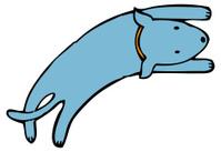 happy blue dog with orange collar jumping