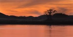 Lake Bird Tree