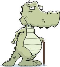 Old Alligator