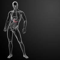 3d render gallblader and pancrease