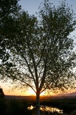 Sunrise Silhoutte Series