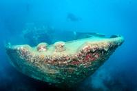 Caribbean Shipwreck