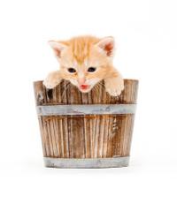yellow kitten in a barrel