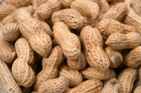 Peanut-Arachis hypogaea