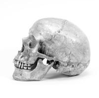 single human skull isolated on white background