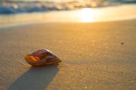 Seashell on Sunset Beach