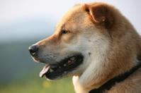 profile of dog