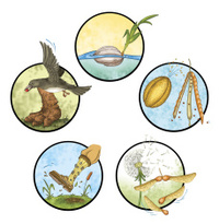 Plant Seeds Dispersal
