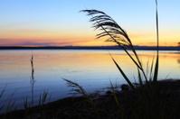 Reeds at sundown