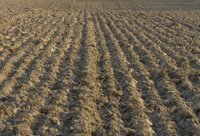 land; arable land; background;