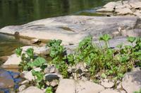 summer landscape with a stony ripa