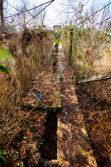 Old Swinging Bridge Siuslaw River