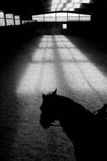 Shadow of Horse in Riding Ring