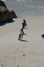 Penguins On Line