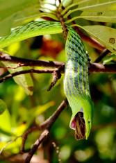 feeding snake