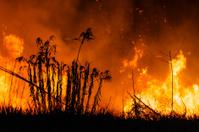 Fire in bush