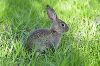 Funny baby rabbit in grass