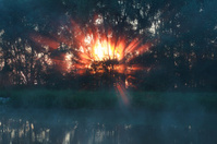 fire sunbeams through trees in summer