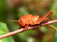 insect bug