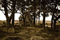 Stone Druid Circle