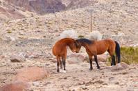 Wild Mustang Standoff
