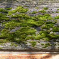 Moss on a Slate Roof