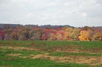 Cloudy Fall Foliage Scenic