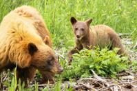 Bear cub playing next to his mom