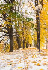 Snowy golden autumn avenue at winter