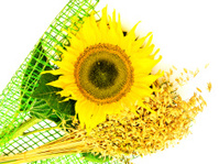 Sunflower And Oats
