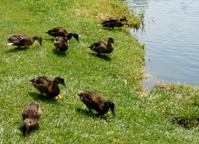 Zoo : Duck Pond