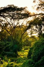 Nice sun ray with tree wilderness