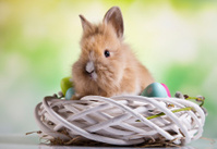 Happy easter, Baby bunny
