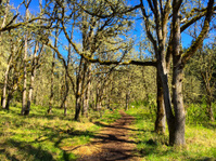 Oregon Hiking Trail
