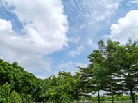 Park on summer