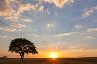 Sunset and lone tree at Ezemvelo