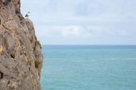 Bird in rock